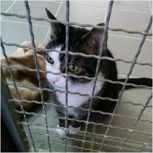 Eine Katze schaut durch ein Käfiggitter im Tierheim